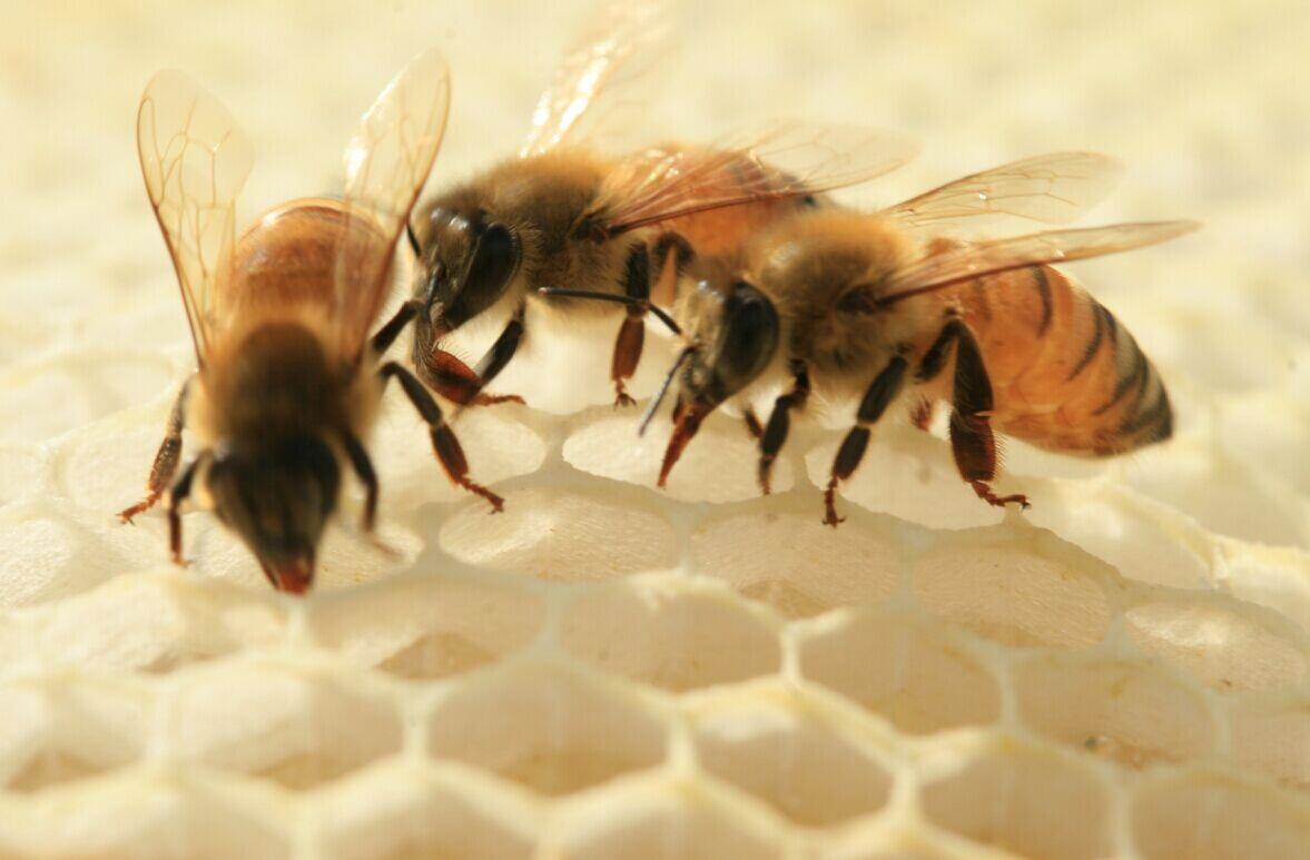 美蜂美妙蜂王浆可治疗失眠