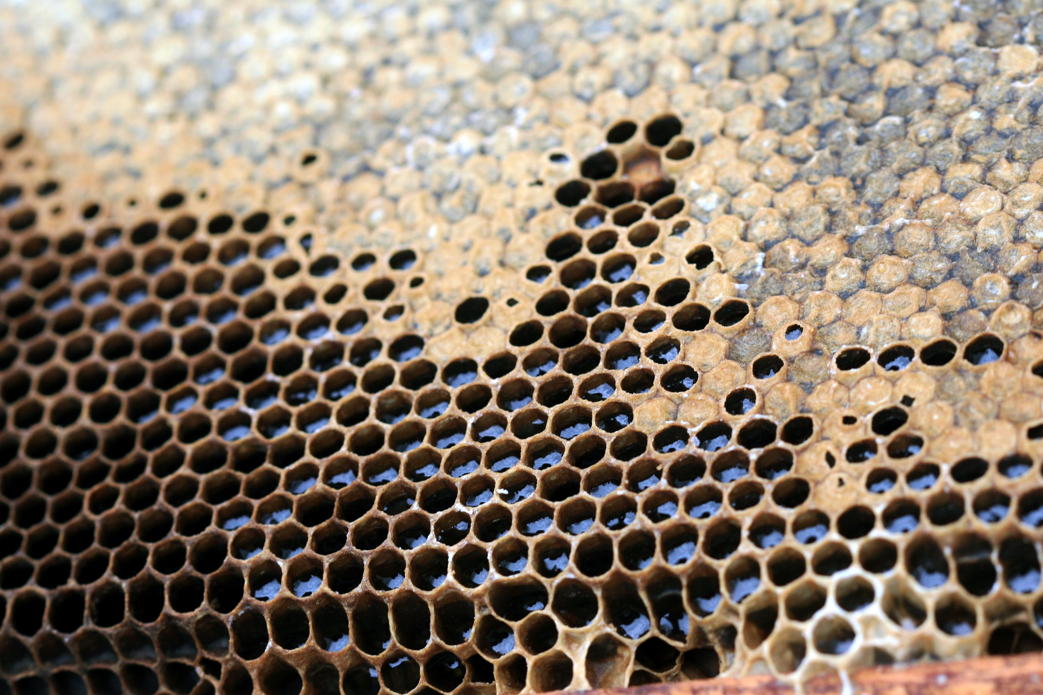 同样是蜂蜜,凭什么有的要比普通蜂蜜贵几倍?